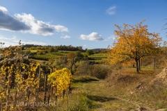 Herbstgewand