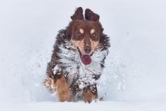 Fun im Schnee