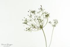 Flower_FC