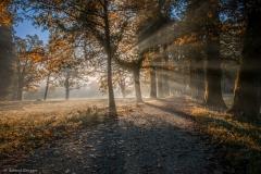 Herbstimpressionen-FC