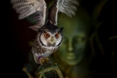 Roland-Brugger_Sparte1_the-owl
